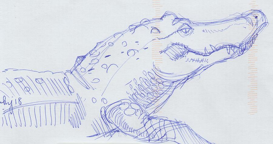 Alligator sketch  by Mike Jory