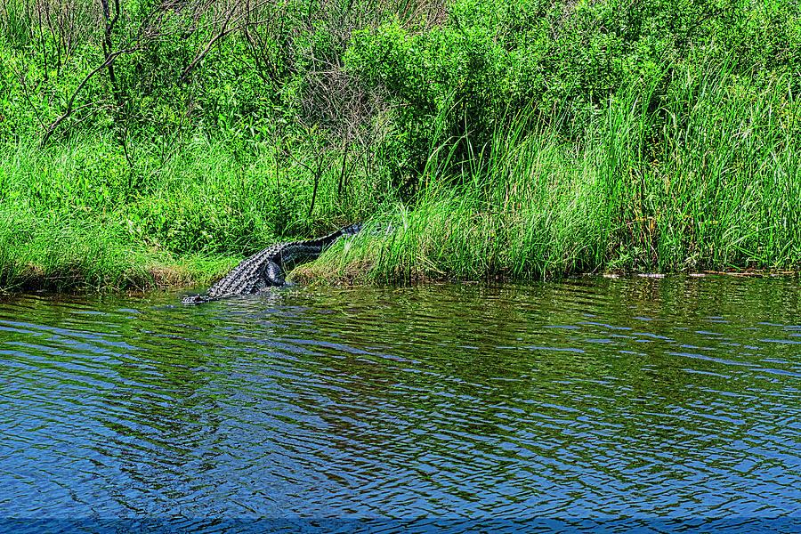 Alligator Slide Photograph