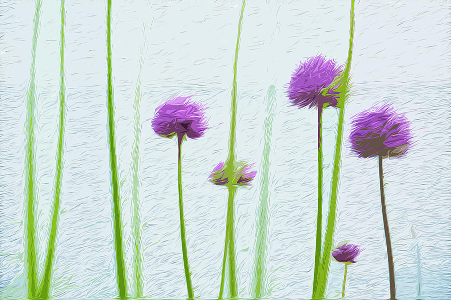 Allium stand by Garden Gate magazine
