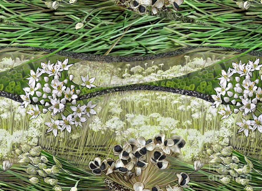 Allium Tuberosum by CR Leyland