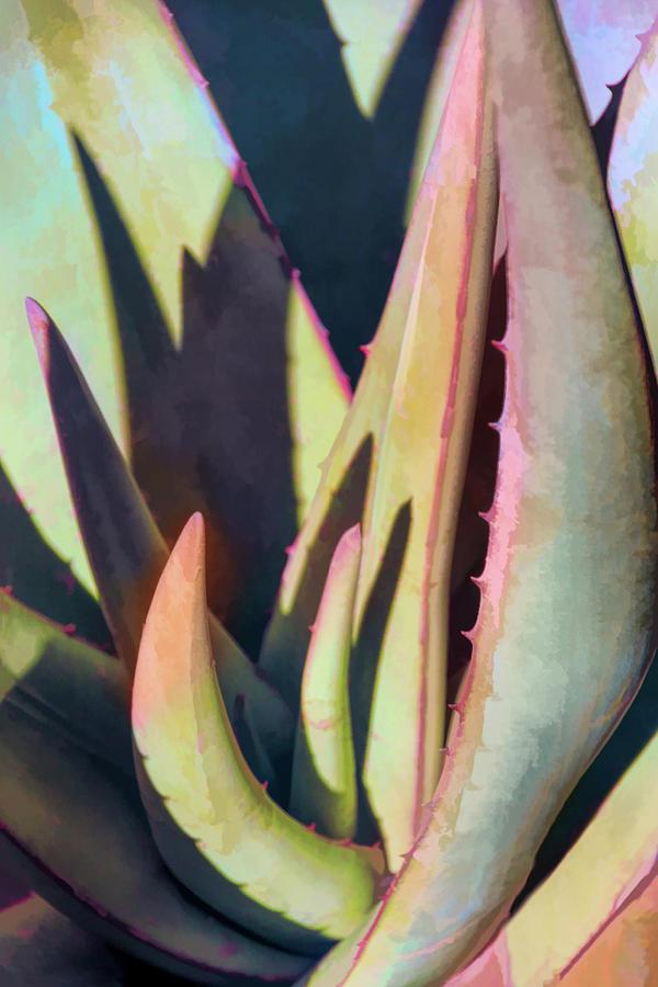 Aloe Intrigue by Leda Robertson