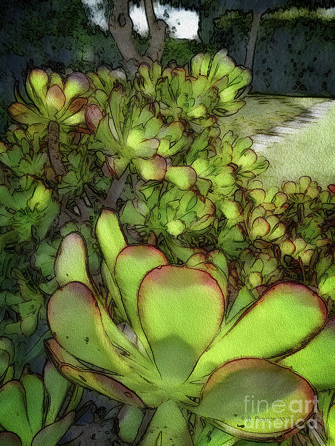 Garden Digital Art - Aloe Succulent by Dee Flouton