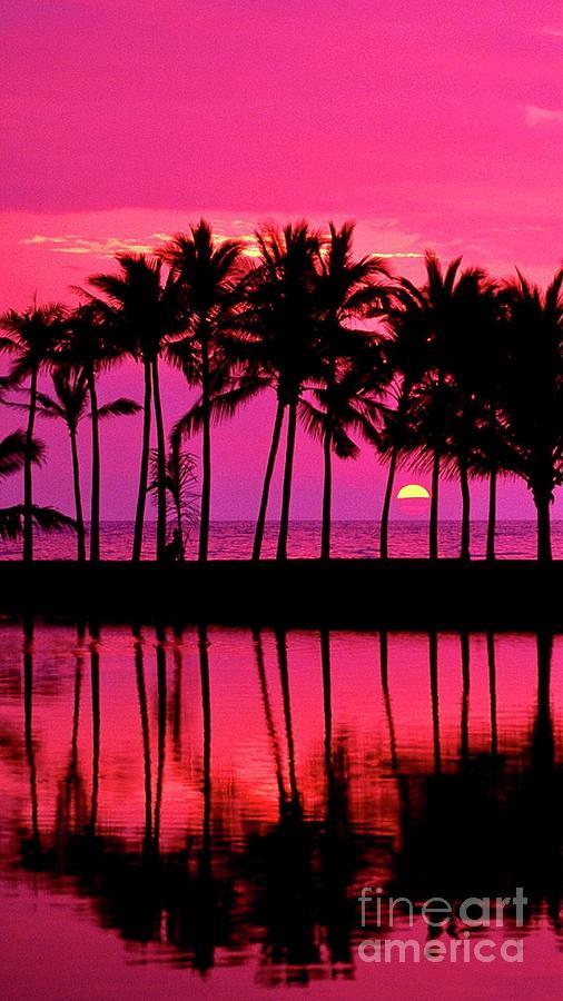 Aloha Friday  by EliteBrands Co