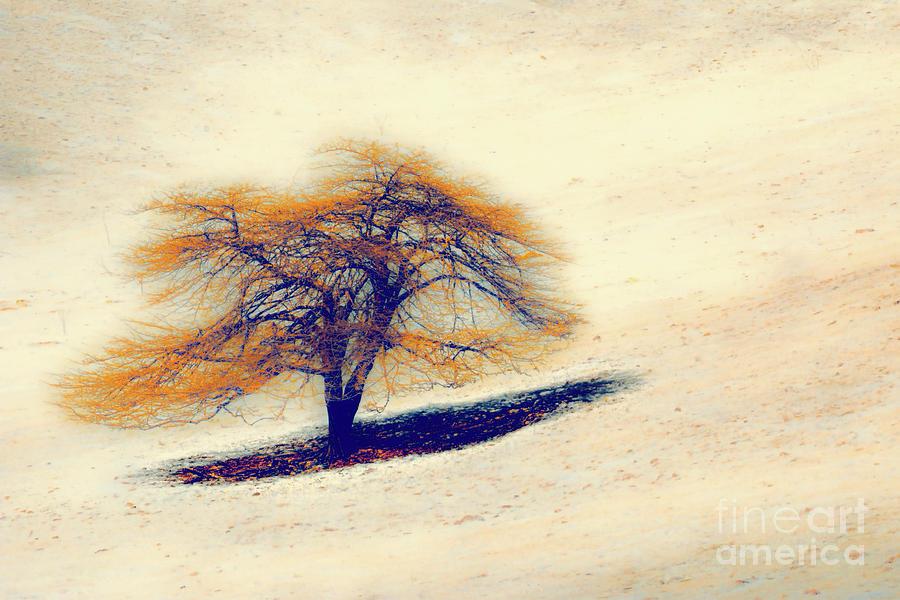 Alone by Dan Carmichael