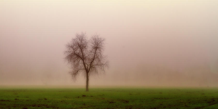 Alone in the fog by Roberto Pagani
