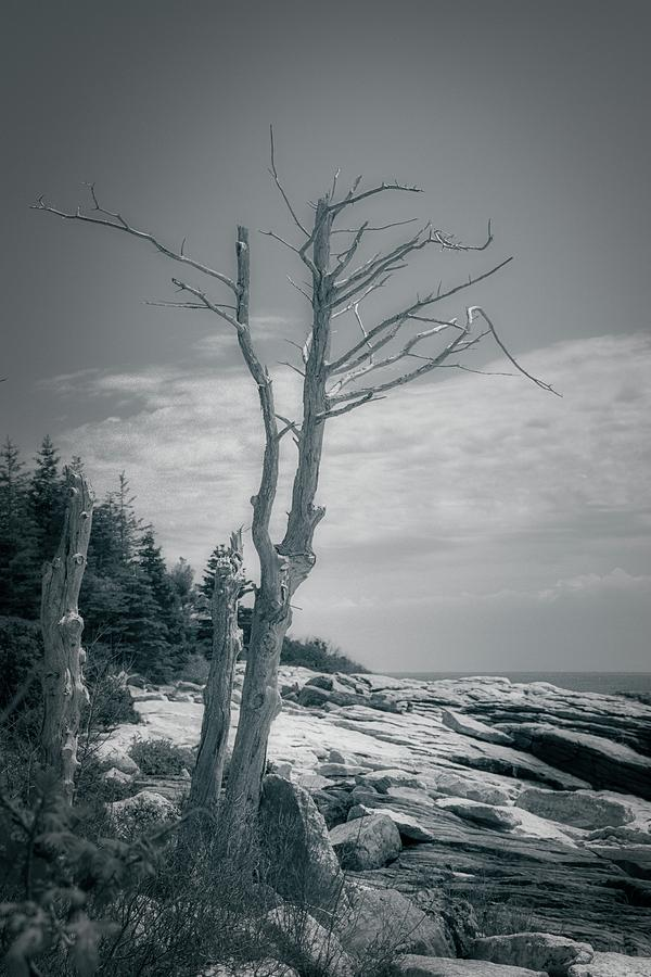 Along A Rocky Coast in Maine by Guy Whiteley