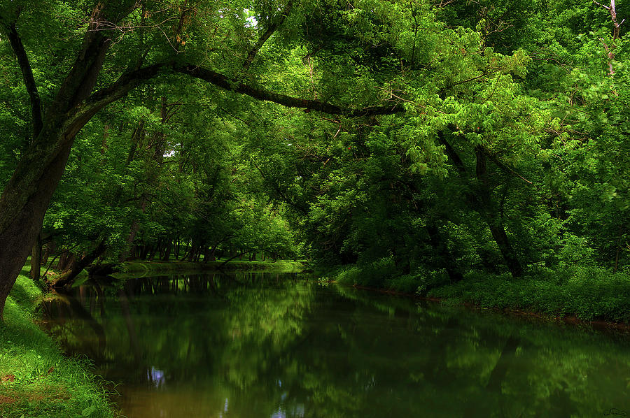 Along the banks of Big Creek in Tennessee by Dee Browning