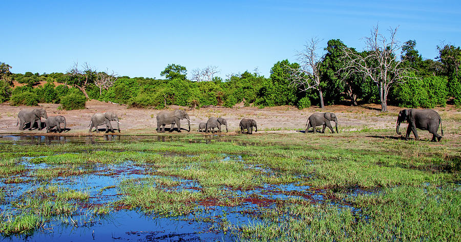 Along the Banks of the Chobe River  by Marcy Wielfaert