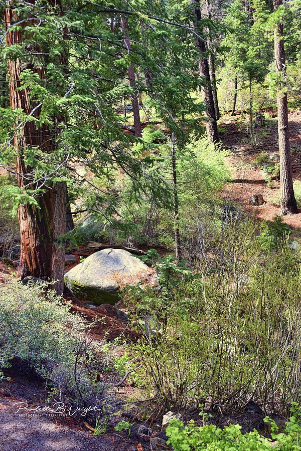 Along The Castle Rock Trail by Paulette B Wright