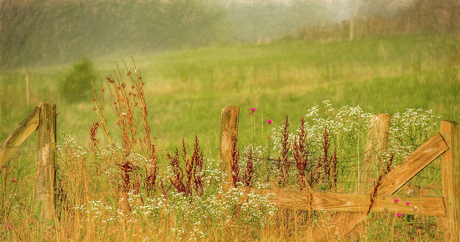 Along the Fence in Summer by Marcy Wielfaert