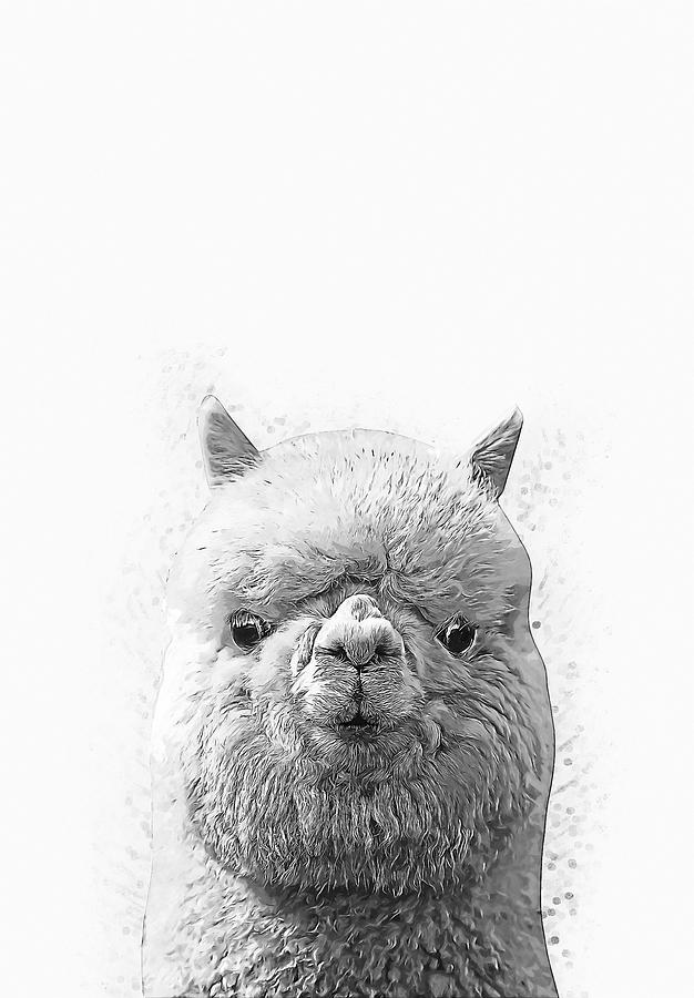 Alpaca Digital Art