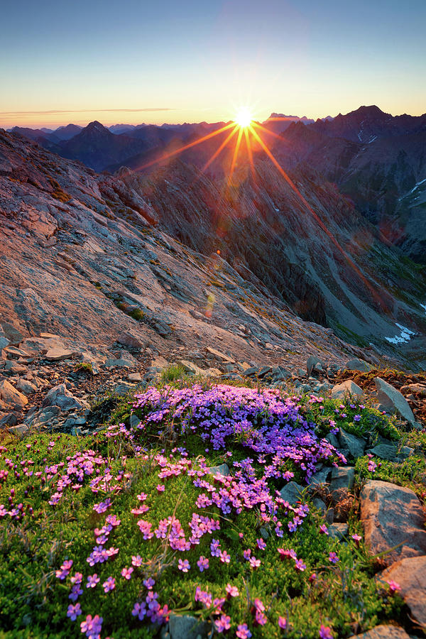 Alpine Sunrise With Flowers In The Photograph by Wingmar