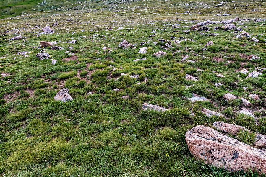 Alpine Tundra by Jon Burch Photography