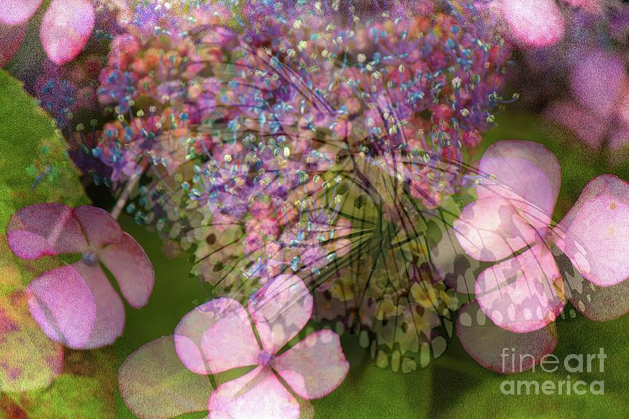 Altered state of consciousness with Butterfly by Fine art photographer JULIE