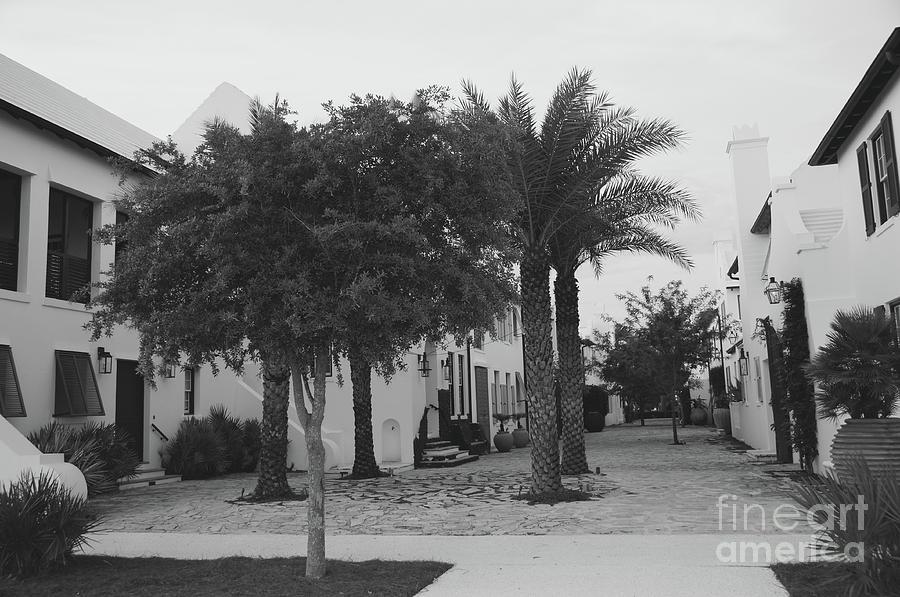 Palms Photograph - Alys Streetscape by Megan Cohen