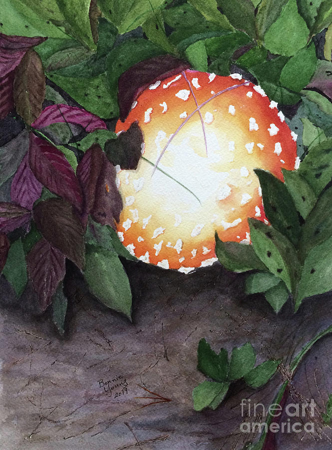 Amanita muscaria by Bonnie Young