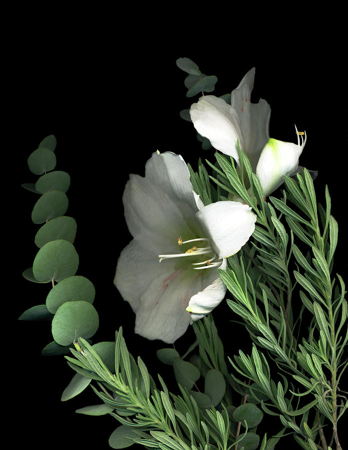 Amaryllis With Lavender & Eucalyptus Painting by Susan S. Barmon