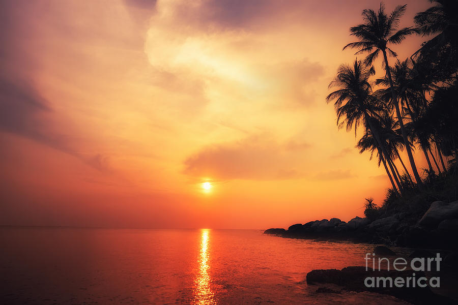 Palm Photograph - Amazing Colors Of Tropical Sunset by Perfect Lazybones