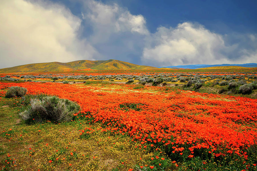 Amazing Days of the 2019 Superbloom by Lynn Bauer