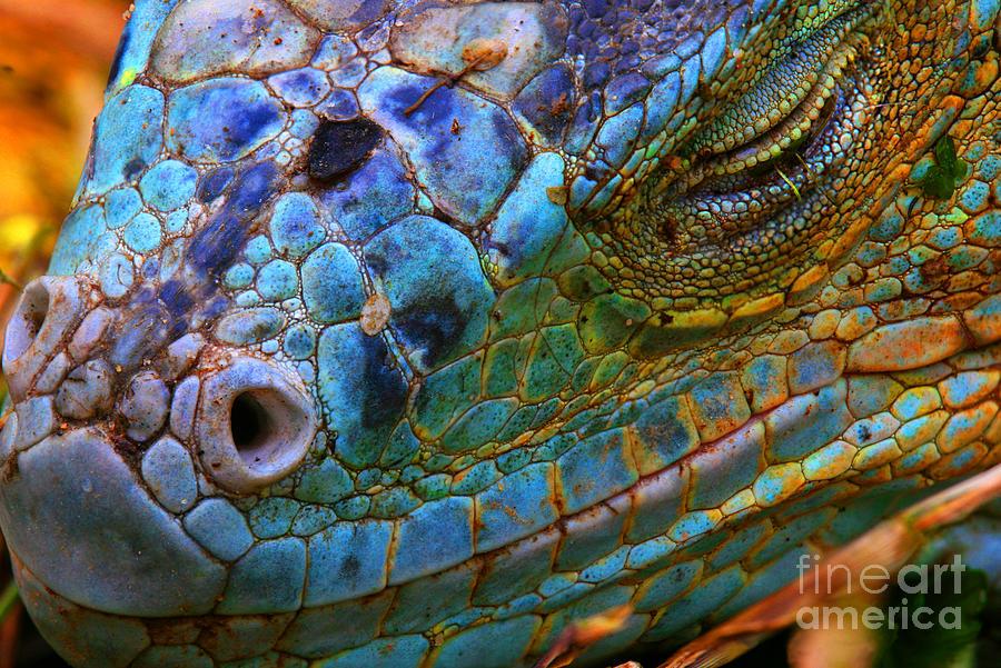Dragon Photograph - Amazing Iguana Specimen Displaying A by Tessarthetegu