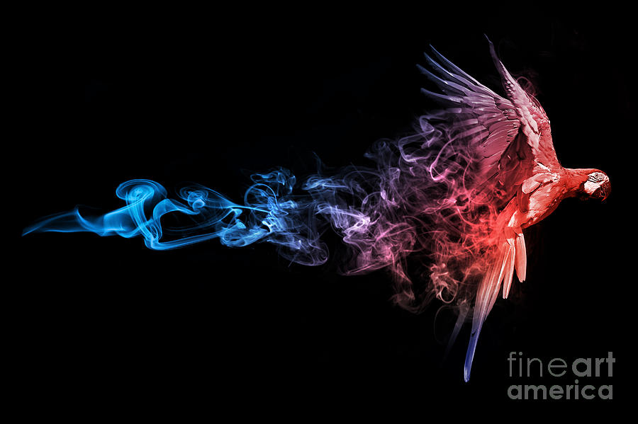 Suriname Photograph - Amazing Image Of A Flying Macaw Parrot by Effect Of Darkness