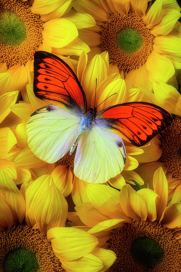 Stunning Photograph - Amazing Orange Yellow Butterfly by Garry Gay