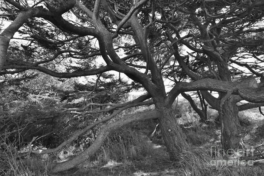 Amazing Trees by Jeni Gray