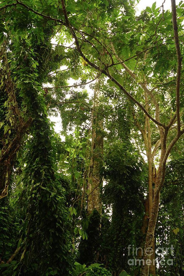 Amazon Trees by Cassandra Buckley