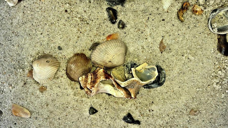 Amelia Island Treasures by Kathy K McClellan