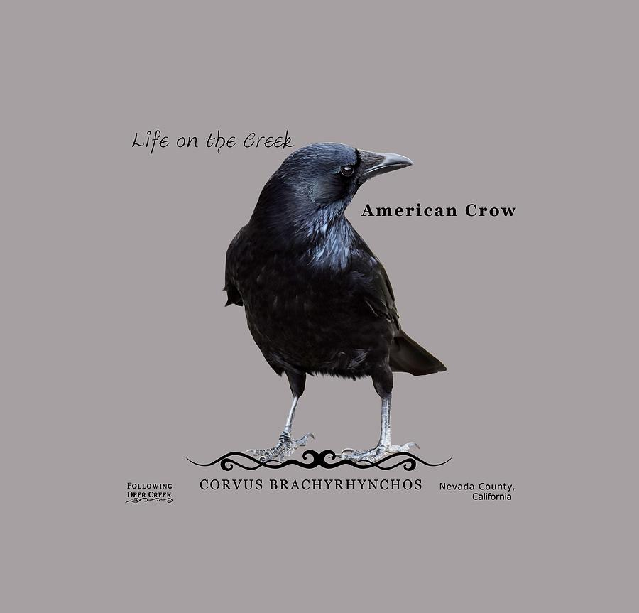 American Crow by Lisa Redfern