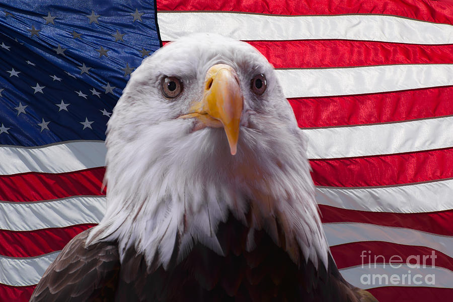 American eagle and flag by Zina Stromberg