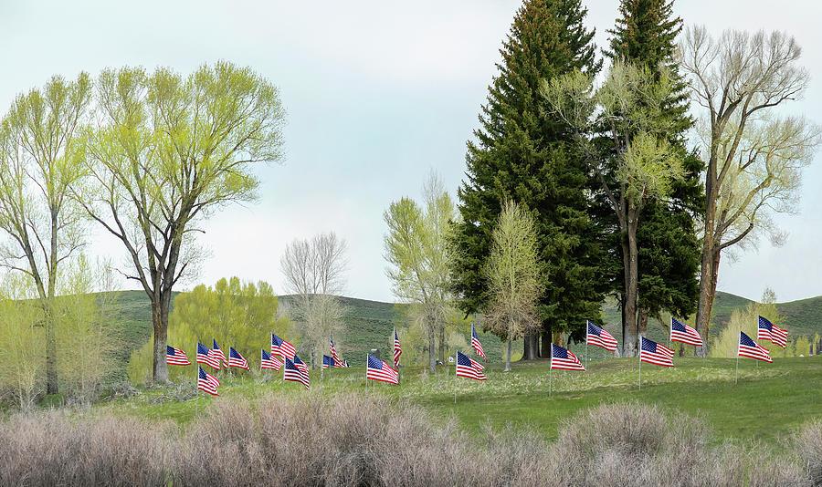 American Flag by Lisa Malecki