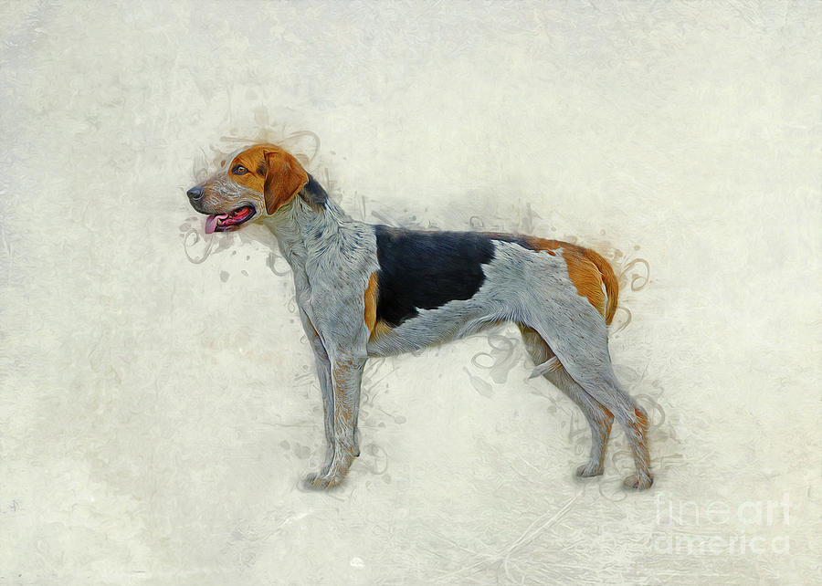 American Foxhound by Ian Mitchell