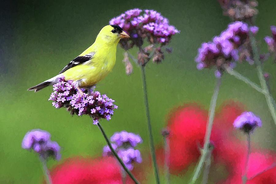 American Gold Finch Painting by Carol Montoya