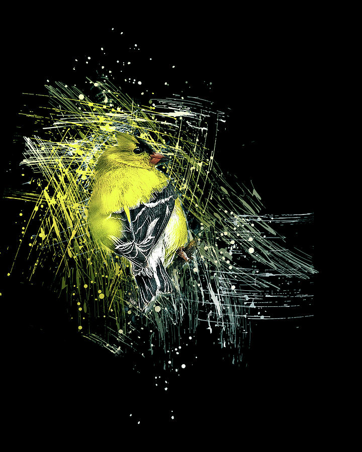 American Goldfinch by Jennifer Grossnickle