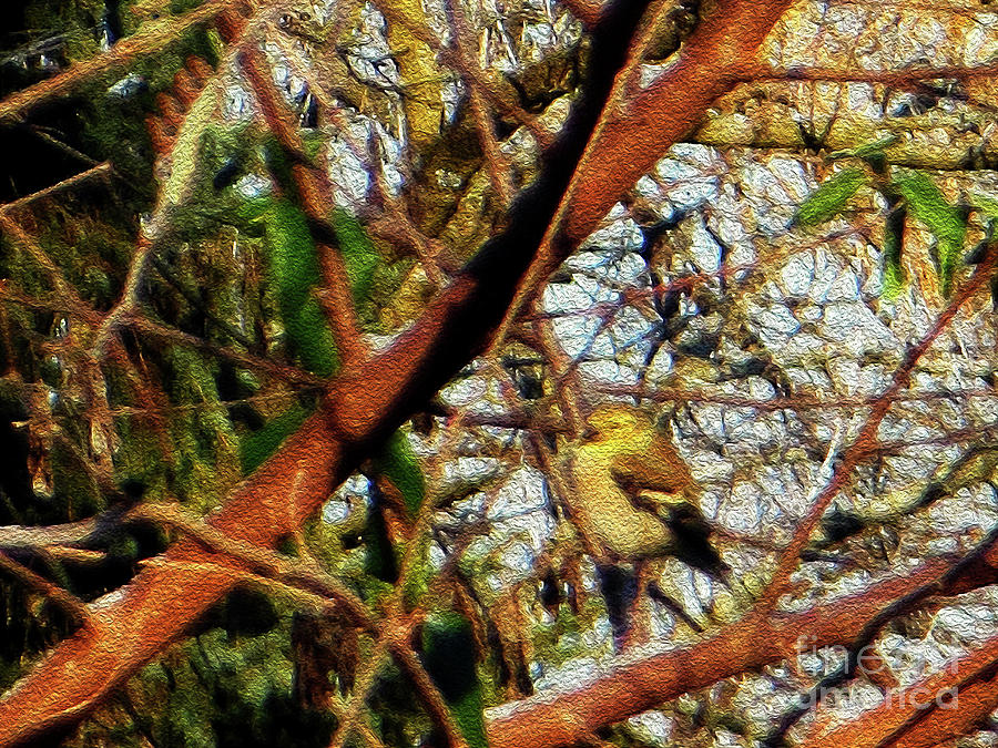 American Goldfinch by Rockin Docks