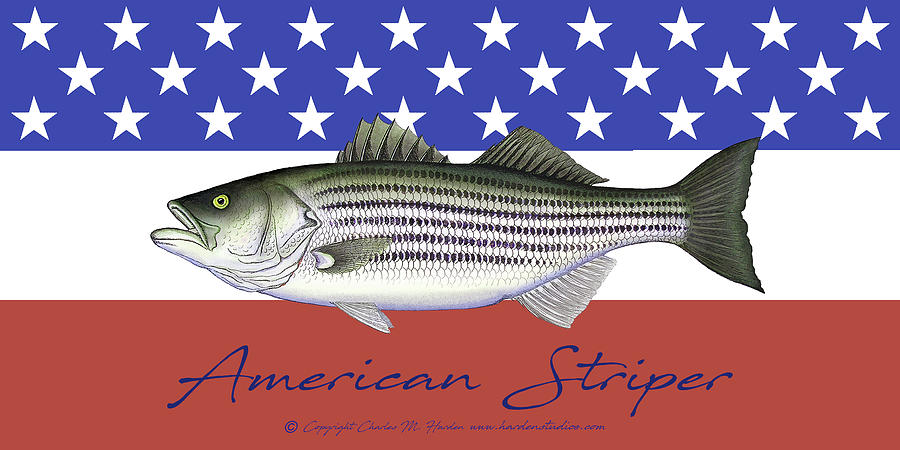 American Striper Patriotic Striped Bass by Charles Harden