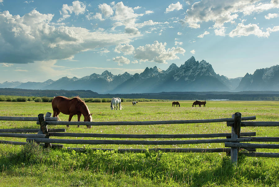 American West Horses And Grand Teton Photograph by Jimveilleux