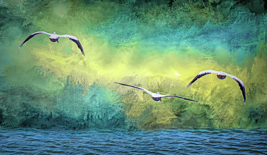 American White Pelicans at Sea Abstract 1 by Linda Brody