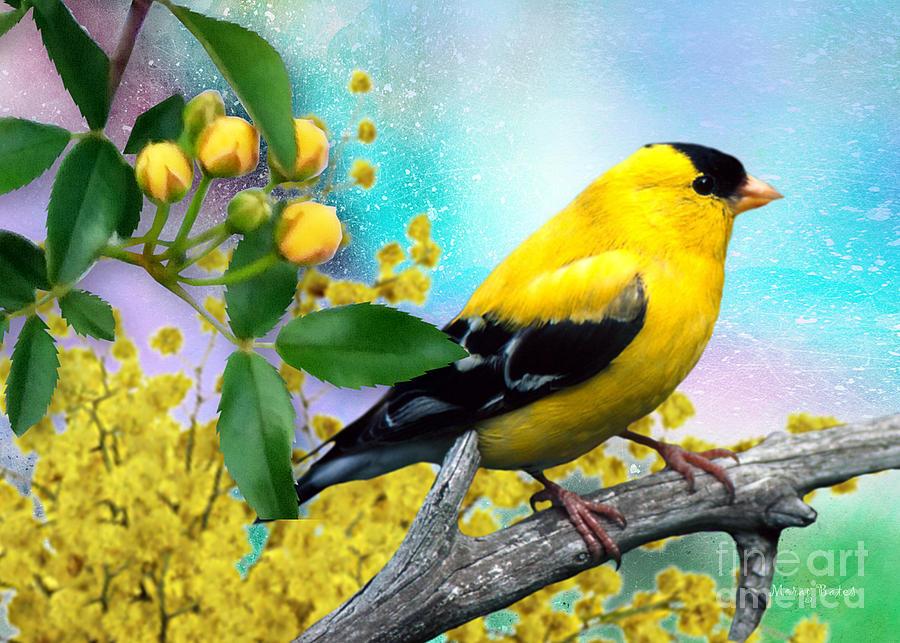 American Yellow Finch by Morag Bates