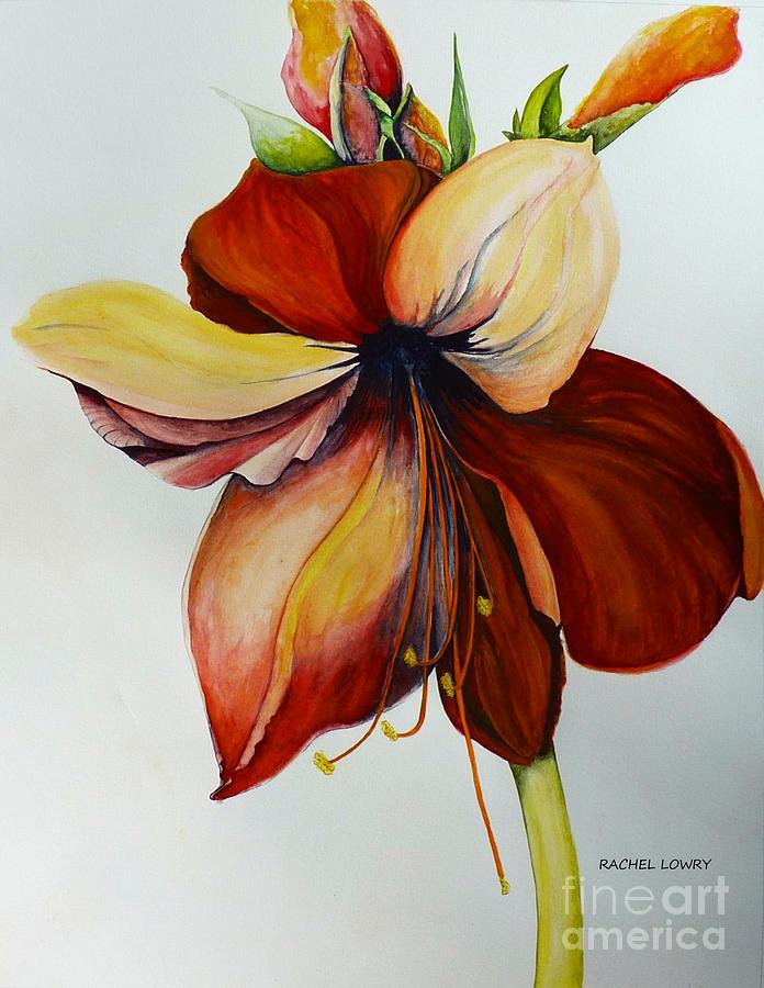 Amerylis/Amaryllis  by Rachel Lowry