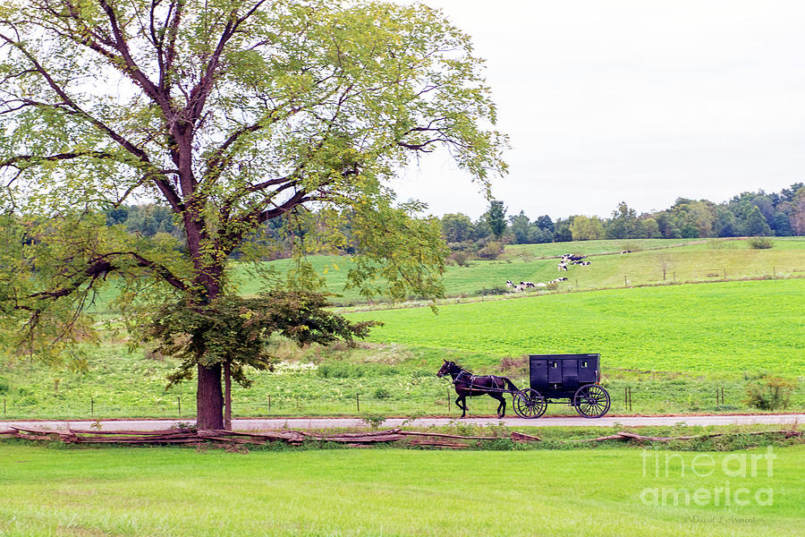 Amish Buggy Rural Road by David Arment
