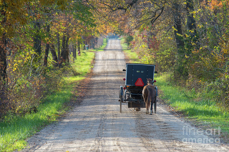 Amish Buggy with Horse in Tow by David Arment
