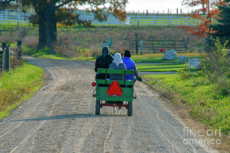 Amish in Pony Cart by David Arment