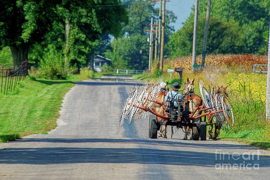 Amish Man and Team with Hay Rake by David Arment
