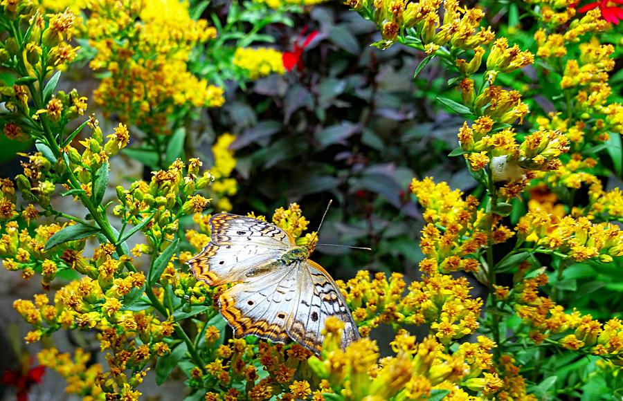 Among The Flowers Photograph