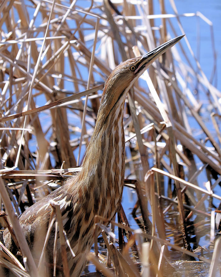 Among The Reeds by Doris Potter
