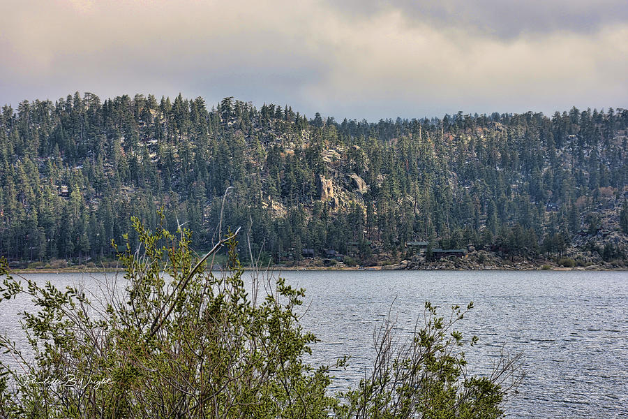 Among The Rocks And Trees by Paulette B Wright