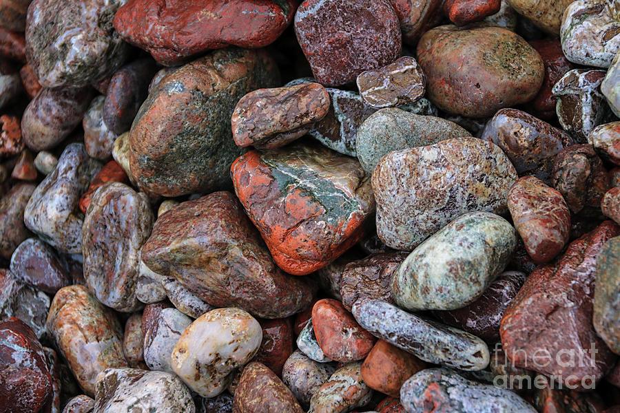 Among the Stones by Rachel Cohen