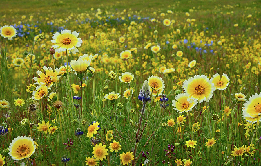 Among The Wildflowers Photograph By Kathy Yates